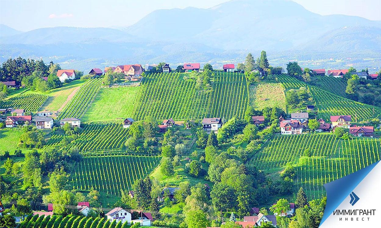 Виноградники на склонах холмов