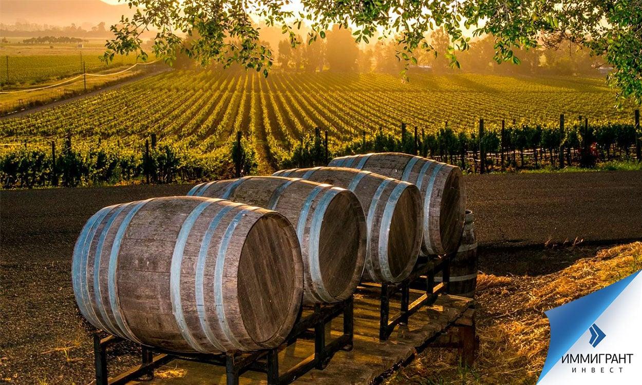 Дубовые бочки на фоне виноградника