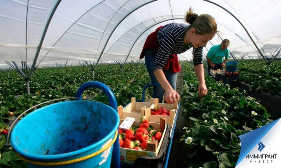 Сезонная работа пользуется все большей популярностью у граждан СНГ