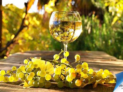 Главное о виноделии и национальных винах Австрии