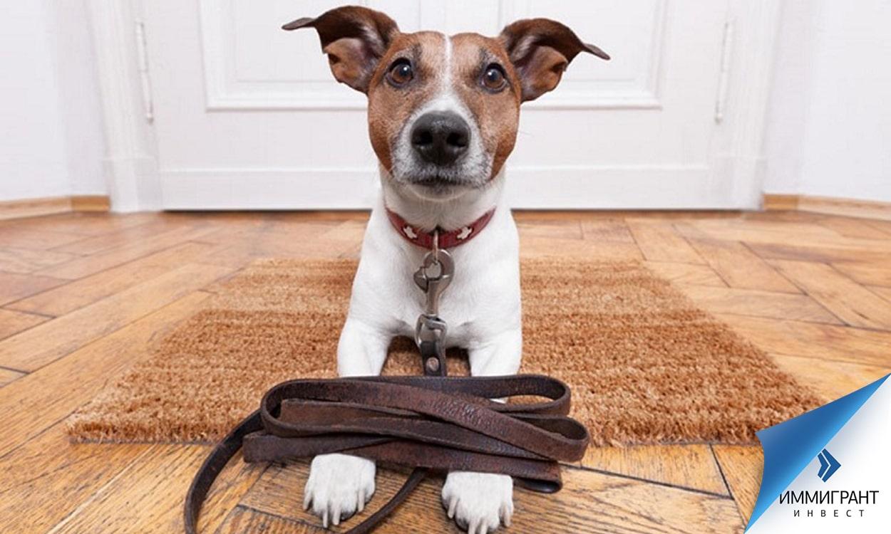 Собаки не должны мешать лаем соседям в периоды тишины, хозяина невоспитанного животного могут привлечь к ответственности